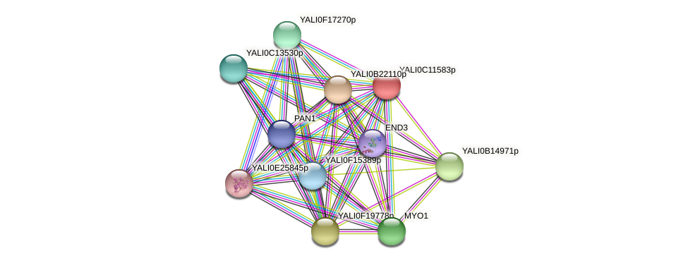 XP_501729.2 protein (Yarrowia lipolytica) - STRING interaction network