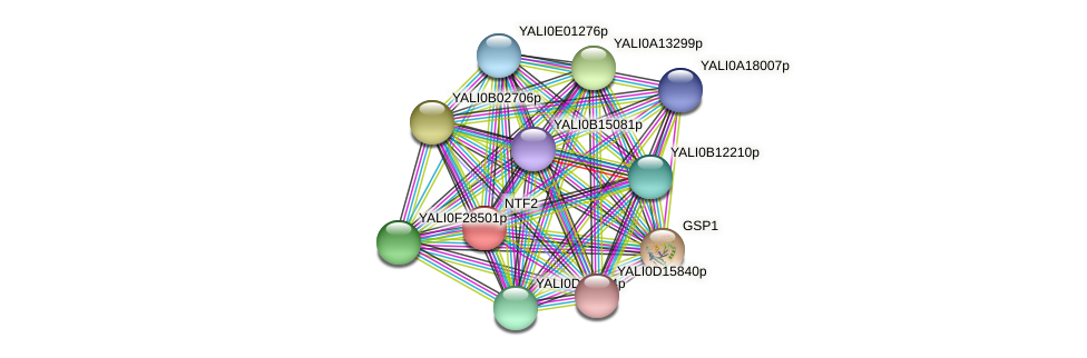 NTF2 protein (Yarrowia lipolytica) - STRING interaction network