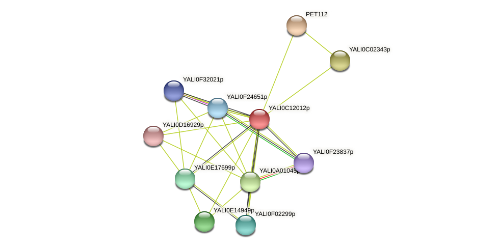 XP_501744.1 protein (Yarrowia lipolytica) - STRING interaction network