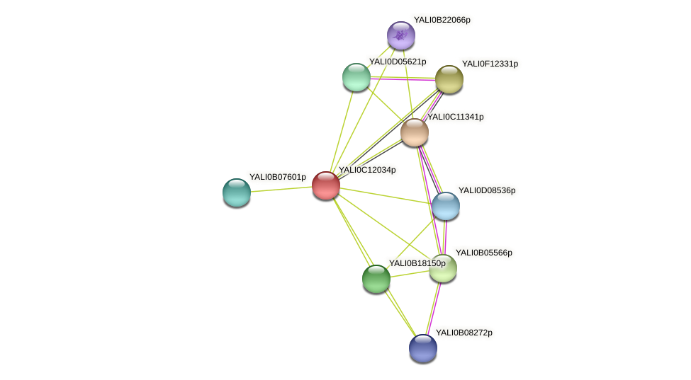 XP_501745.1 protein (Yarrowia lipolytica) - STRING interaction network