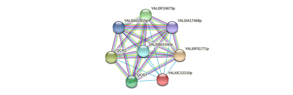 XP_501752.2 protein (Yarrowia lipolytica) - STRING interaction network