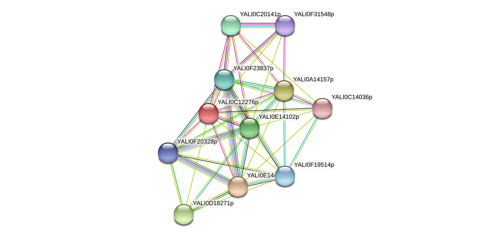 XP_501755.1 protein (Yarrowia lipolytica) - STRING interaction network