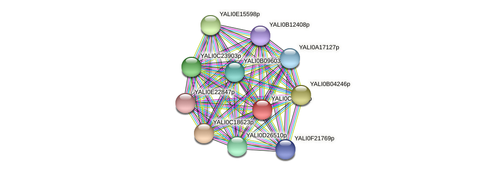 XP_501762.2 protein (Yarrowia lipolytica) - STRING interaction network