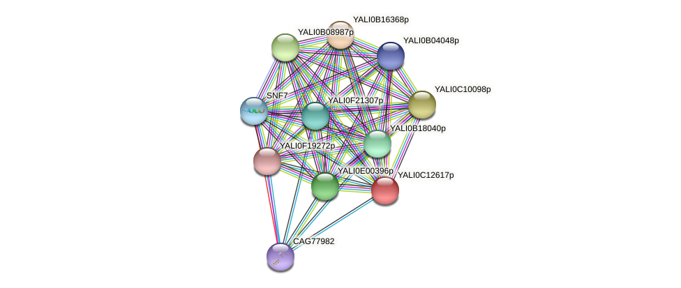 XP_501769.1 protein (Yarrowia lipolytica) - STRING interaction network