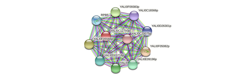 XP_501775.1 protein (Yarrowia lipolytica) - STRING interaction network