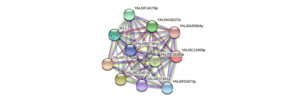XP_501776.1 protein (Yarrowia lipolytica) - STRING interaction network
