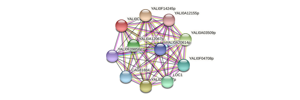 XP_501777.1 protein (Yarrowia lipolytica) - STRING interaction network
