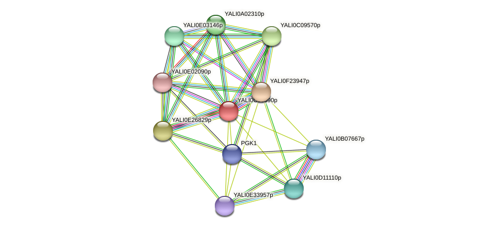 XP_501784.1 protein (Yarrowia lipolytica) - STRING interaction network