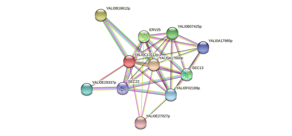XP_501785.1 protein (Yarrowia lipolytica) - STRING interaction network