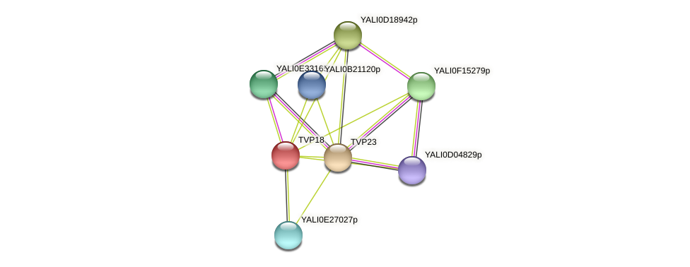 TVP18 protein (Yarrowia lipolytica) - STRING interaction network