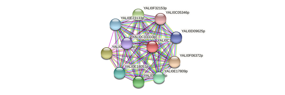 XP_501810.1 protein (Yarrowia lipolytica) - STRING interaction network