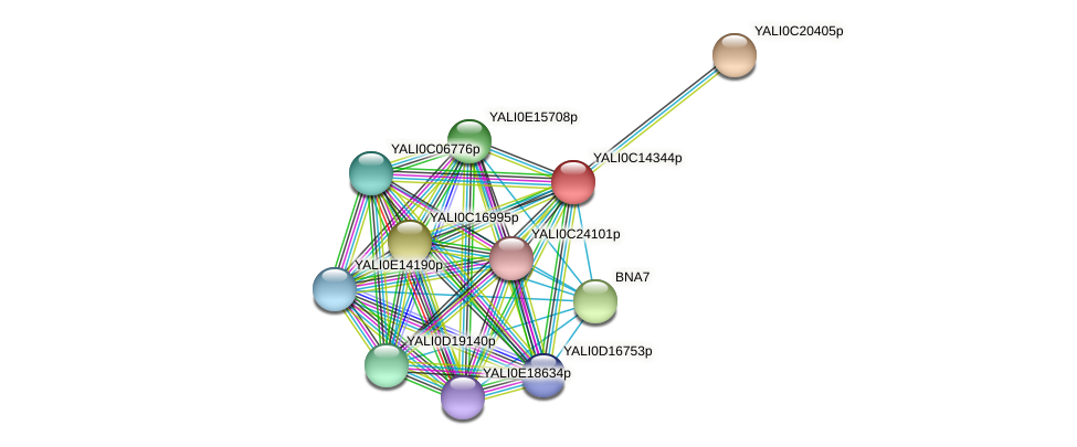 XP_501824.1 protein (Yarrowia lipolytica) - STRING interaction network