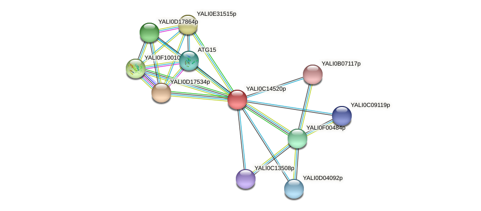 XP_501831.1 protein (Yarrowia lipolytica) - STRING interaction network