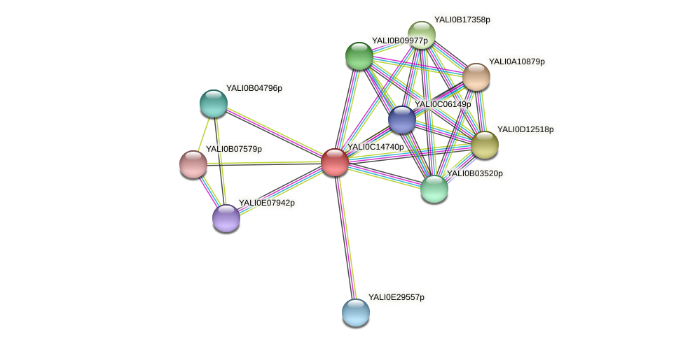 XP_501841.1 protein (Yarrowia lipolytica) - STRING interaction network