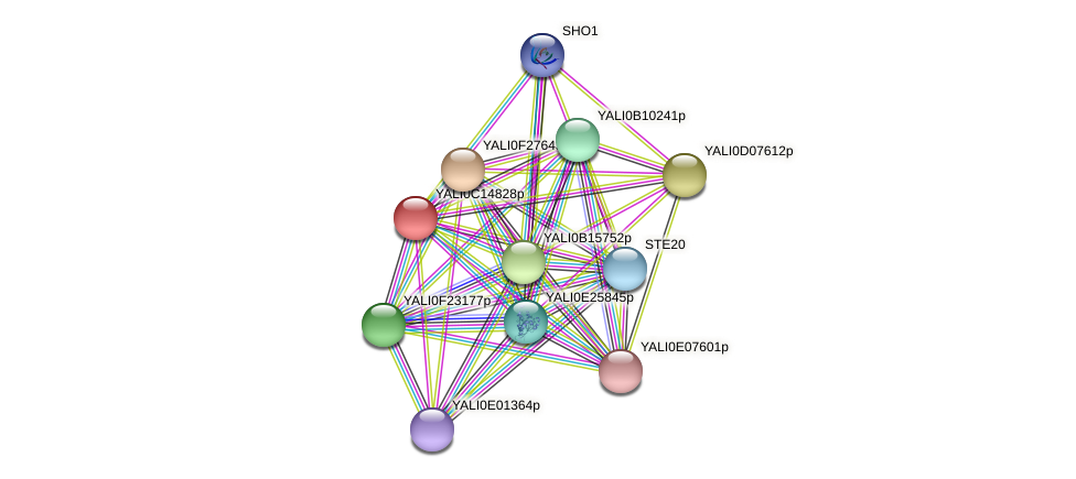 XP_501845.1 protein (Yarrowia lipolytica) - STRING interaction network