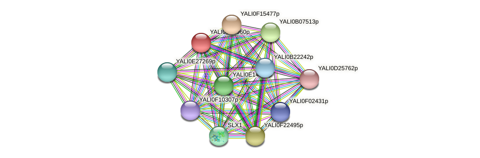 XP_501848.1 protein (Yarrowia lipolytica) - STRING interaction network