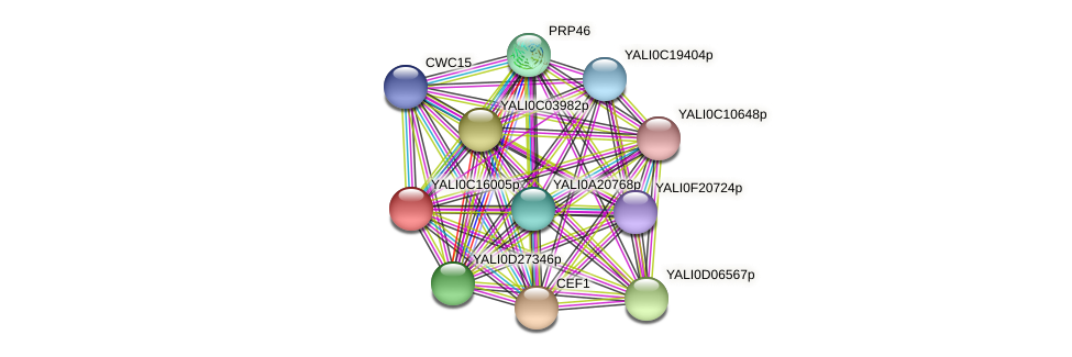 XP_501888.1 protein (Yarrowia lipolytica) - STRING interaction network