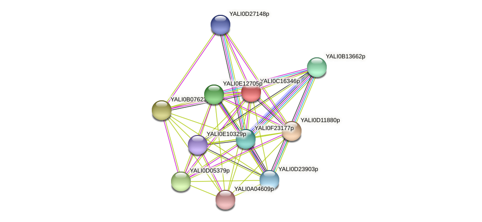 XP_501899.2 protein (Yarrowia lipolytica) - STRING interaction network