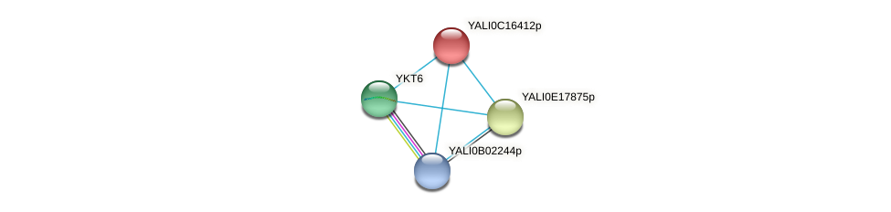 XP_501902.1 protein (Yarrowia lipolytica) - STRING interaction network