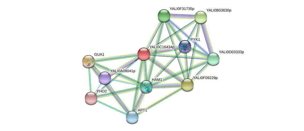XP_501903.1 protein (Yarrowia lipolytica) - STRING interaction network