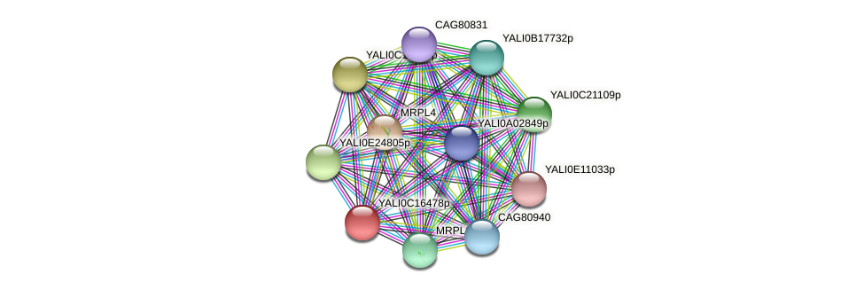 XP_501905.1 protein (Yarrowia lipolytica) - STRING interaction network