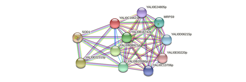 XP_501911.1 protein (Yarrowia lipolytica) - STRING interaction network