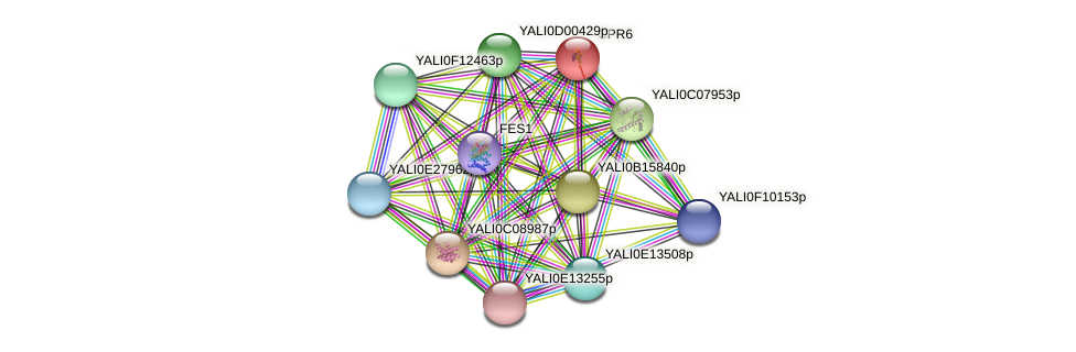 CPR6 protein (Yarrowia lipolytica) - STRING interaction network