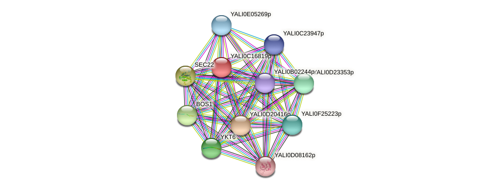 XP_501920.1 protein (Yarrowia lipolytica) - STRING interaction network