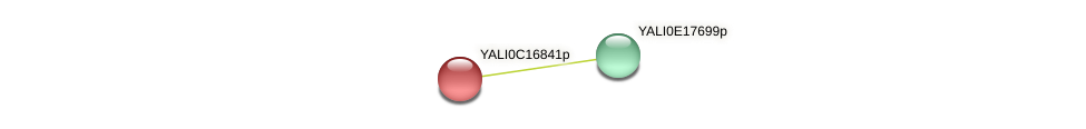 XP_501921.1 protein (Yarrowia lipolytica) - STRING interaction network