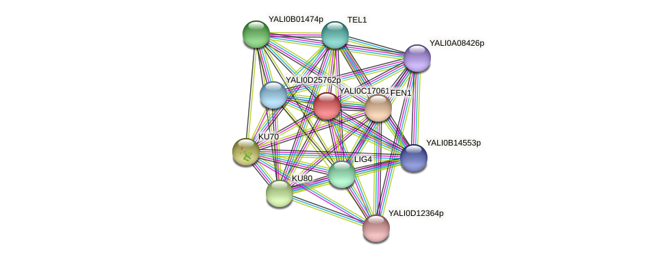 XP_501931.1 protein (Yarrowia lipolytica) - STRING interaction network