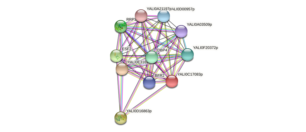 XP_501932.1 protein (Yarrowia lipolytica) - STRING interaction network