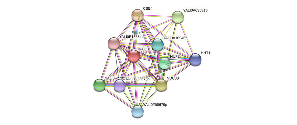 XP_501945.1 protein (Yarrowia lipolytica) - STRING interaction network