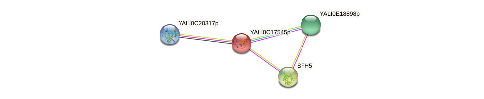 XP_501946.1 protein (Yarrowia lipolytica) - STRING interaction network