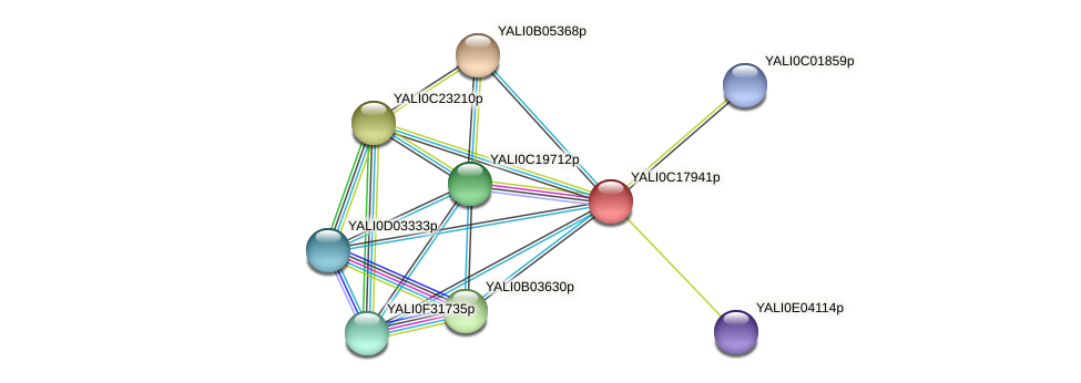 XP_501956.1 protein (Yarrowia lipolytica) - STRING interaction network