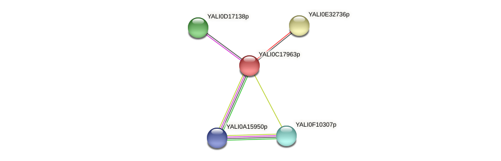 XP_501957.1 protein (Yarrowia lipolytica) - STRING interaction network