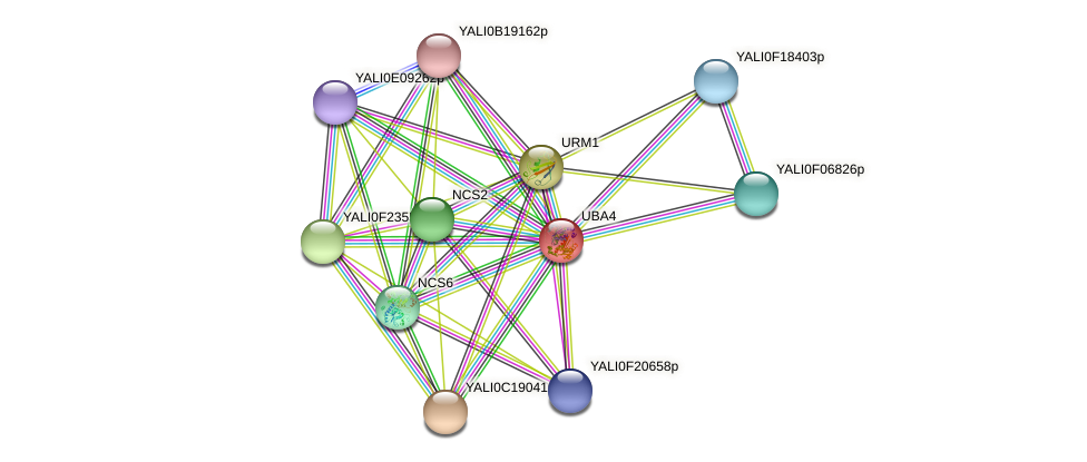 UBA4 protein (Yarrowia lipolytica) - STRING interaction network