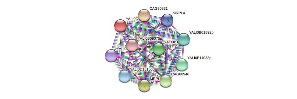 XP_501963.1 protein (Yarrowia lipolytica) - STRING interaction network
