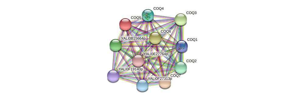 XP_501966.1 protein (Yarrowia lipolytica) - STRING interaction network