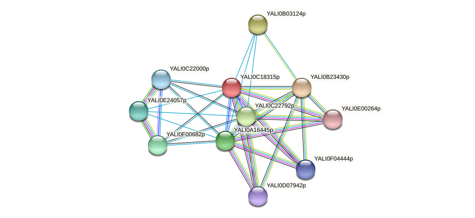 XP_501971.1 protein (Yarrowia lipolytica) - STRING interaction network