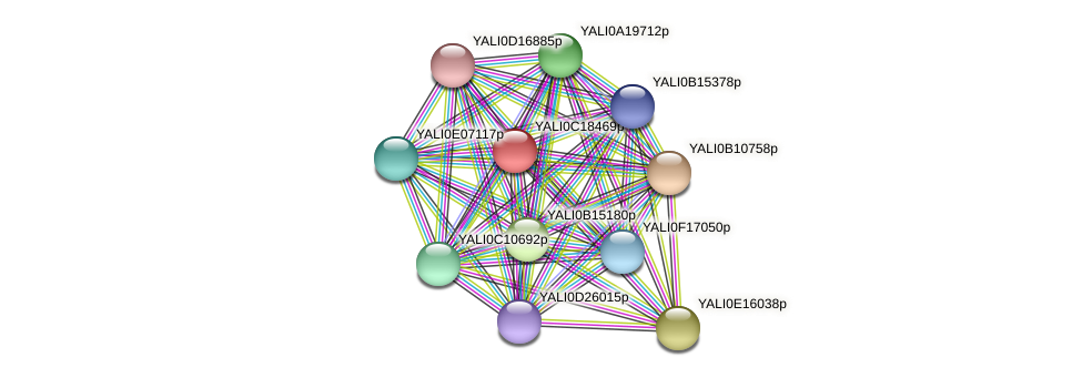 XP_501978.1 protein (Yarrowia lipolytica) - STRING interaction network