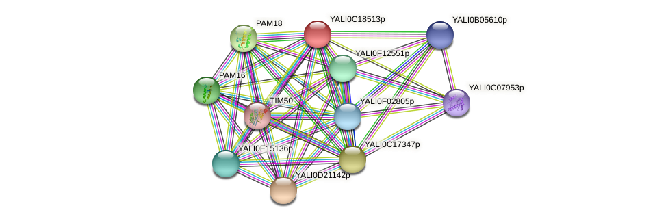 XP_501980.1 protein (Yarrowia lipolytica) - STRING interaction network