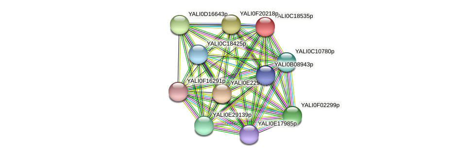 XP_501981.1 protein (Yarrowia lipolytica) - STRING interaction network