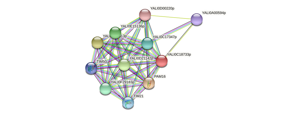 XP_501988.1 protein (Yarrowia lipolytica) - STRING interaction network