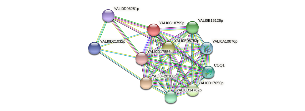 XP_501991.1 protein (Yarrowia lipolytica) - STRING interaction network