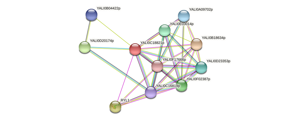 XP_501992.1 protein (Yarrowia lipolytica) - STRING interaction network