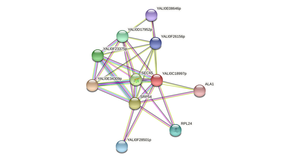 XP_501994.1 protein (Yarrowia lipolytica) - STRING interaction network