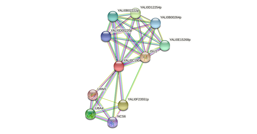 XP_501996.1 protein (Yarrowia lipolytica) - STRING interaction network