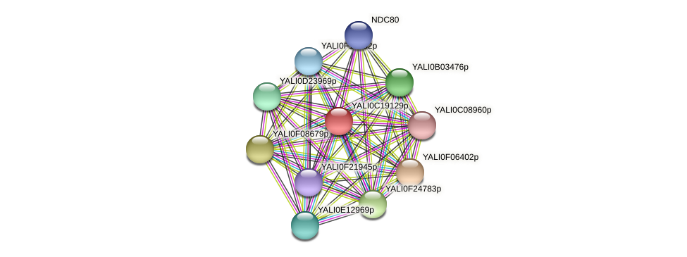 XP_502000.1 protein (Yarrowia lipolytica) - STRING interaction network