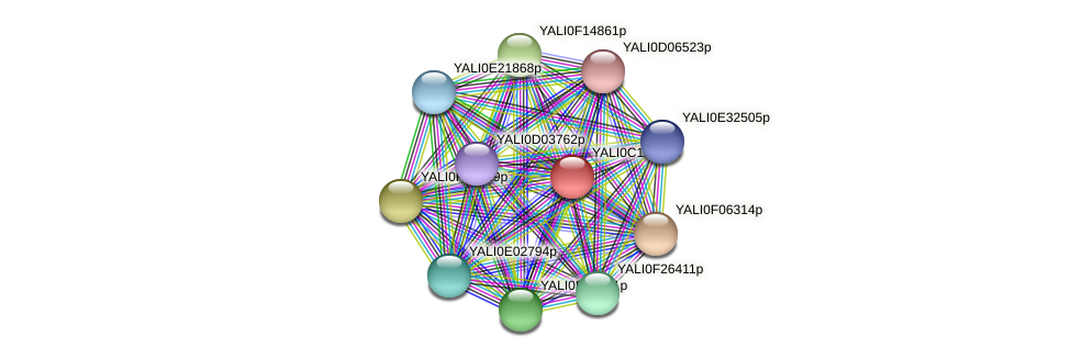 XP_502011.1 protein (Yarrowia lipolytica) - STRING interaction network