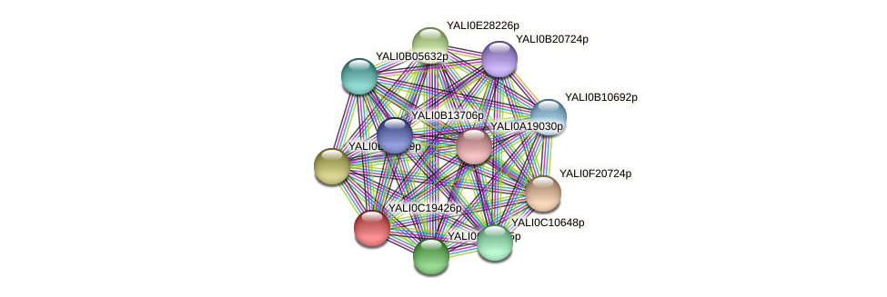 XP_502013.1 protein (Yarrowia lipolytica) - STRING interaction network